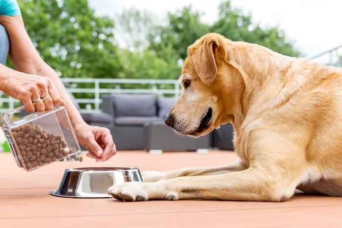 Estimulación del apetito en perros